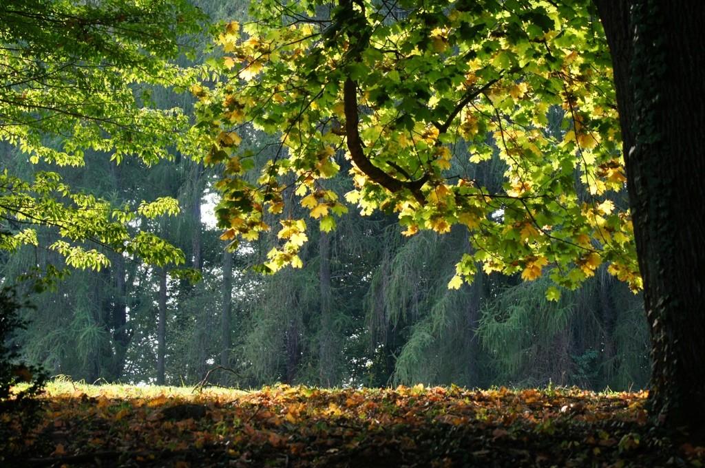 Miejsce na cztery pory roku - Przelewice